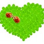 Ladybugs couple — Stock Photo #34562755