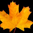 Autumn maple-leaf — Stock Photo