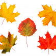 Autumn maple-leaves — Stock Photo