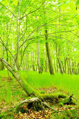 Lake in green hornbeam growth. Beautiful scenery in Bohemian Forest. — Stock Photo