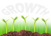 Economic growth concept — Stock Photo