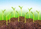 Seedlings in a soil. — Stock Photo