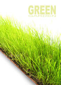 Fresh spring grass — Stock Photo