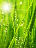 Fresh morning dew — Stock Photo