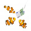 Money on the hook and three clown fish — Stock Photo #34672115