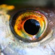 Fish eye close up. — Stock Photo #34672643