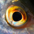 Fish eye close up. — Stock Photo #34672655