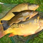 Fish on fishing net — Stock Photo