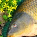 ������, ������: Fish on fishing net