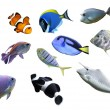 Great sea fish collection — Stock Photo