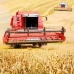 Combine harvesting wheat. — Stock Photo