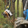 Stock Photo: Harvester working in forest.