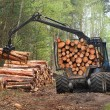 Stock Photo: The harvester working in a forest.