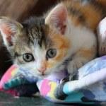 ������, ������: Sweet kitty