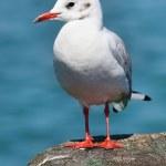 The Seagull. — Stock Photo