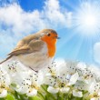 Spring blossom and birdie against sunny sky. — Stock Photo #34676831