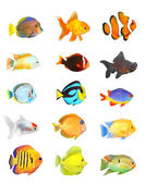 Great collection of a tropical fish — Stock Photo