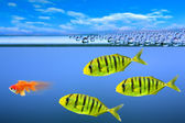 Predatory fishes — Stock Photo