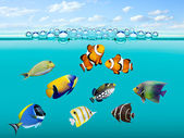 Tropical reef fish. — Stock Photo