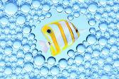 Bild von einem tropischen Fischen. — Stockfoto
