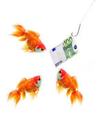 Money on the hook and three gold fish — Stock Photo