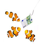 Money on the hook and three clown fish — Stock Photo