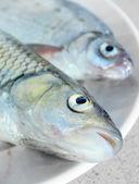 Pesce fresco crudo su un piatto. — Foto Stock