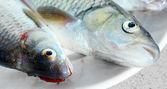 Fresco peixe cru em um prato. — Fotografia Stock