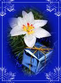 Blue box and flower — Stock Photo