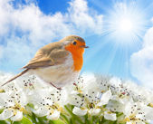 Spring blossom and a birdie against sunny sky. — Stock Photo