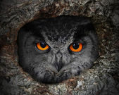 Eagle Owl — Foto Stock