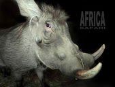 The Warthog (Phacochoerus africanus). — Stock Photo
