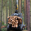 The harvester working in a forest. — Stock Photo #35430127
