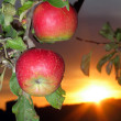 Branch with two apples — Stock Photo #35432689