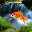 Jumping goldfish — Stock Photo