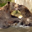 Stock Photo: Furry bears