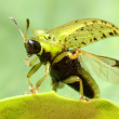 Starts Green Bug — Stock Photo