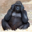 Female gorilla — Stock Photo