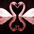 Red Swan's Hearts — Stock Photo
