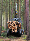 The harvester working in a forest. — Stock Photo