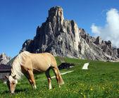 Horse on Passo Giau Dolomiti Mountain — Stock Photo