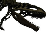 Dinosaur skeleton head — Stock Photo