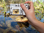 Wildlife photography — Stock Photo