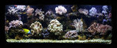Aquarium corals reef — Stock Photo
