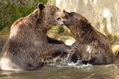 Pelzigen bären — Stockfoto