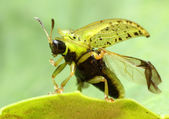 Starts Green Bug — Stock Photo