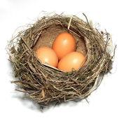 Bird's nest with three eggs — Stock Photo