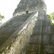 Temple V tikal — Stock Photo #12903082