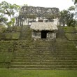 Overgrown mayan ruins — Stock Photo
