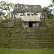 Overgrown mayan ruins — Stock Photo #12903100
